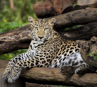 Zoo Oferta